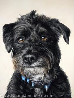 Jackapoo dog portrait