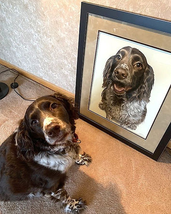 Molly the English Springer Spaniel posing with her framed dog portrait. Portrait hand drawn by pet portrait artist Naomi Jenkin.