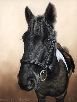 Moorland Pony portrait