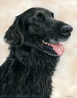 Black Flat-coated Retriever dog portrait