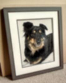 Framed dog portrait of Siggy, hand drawn by professional pet portrait artist Naomi Jenkin.