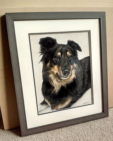 Framed pastel dog portrait drawn by Naomi Jenkin Art.