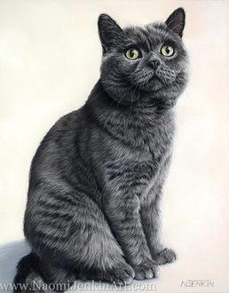 British Shorthaired cat portrait
