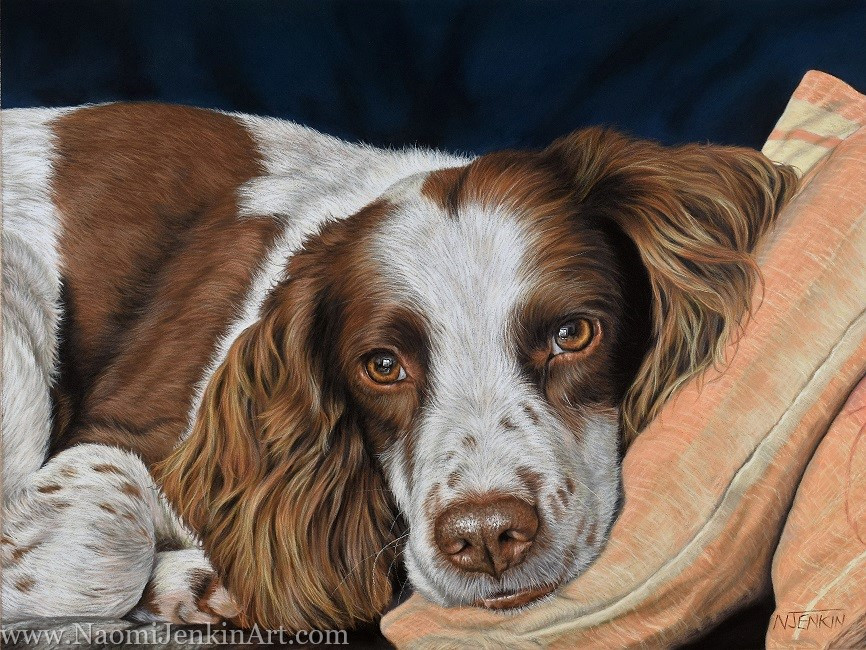 Portrait of Charlie the English Springer Spaniel.