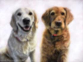 Pastel dog portrait of Beau, the Golden Retriever puppy, and Honey, a Labradoodle. Drawn by pet portrait artist Naomi Jenkin.