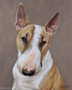 English Bull Terrier portrait