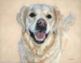 Pastel dog portrait of Ella, the Golden Retriever. Pet portrait drawn by Naomi Jenkin Art.