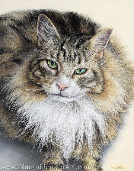 Pastel cat portrait of Simba the Maine Coon cat. Hand drawn by pet portrait artist Naomi Jenkin.