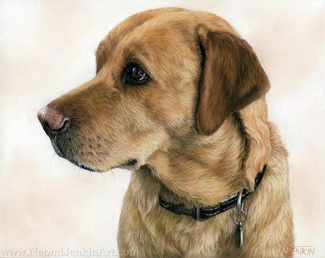 Fox Red Labrador dog portrait