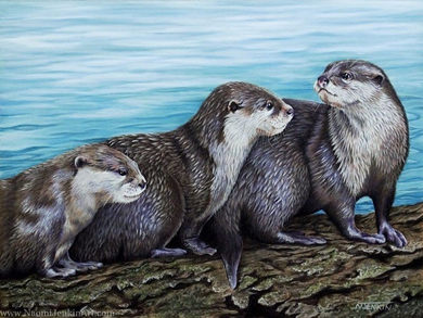 Otter wildlife portrait