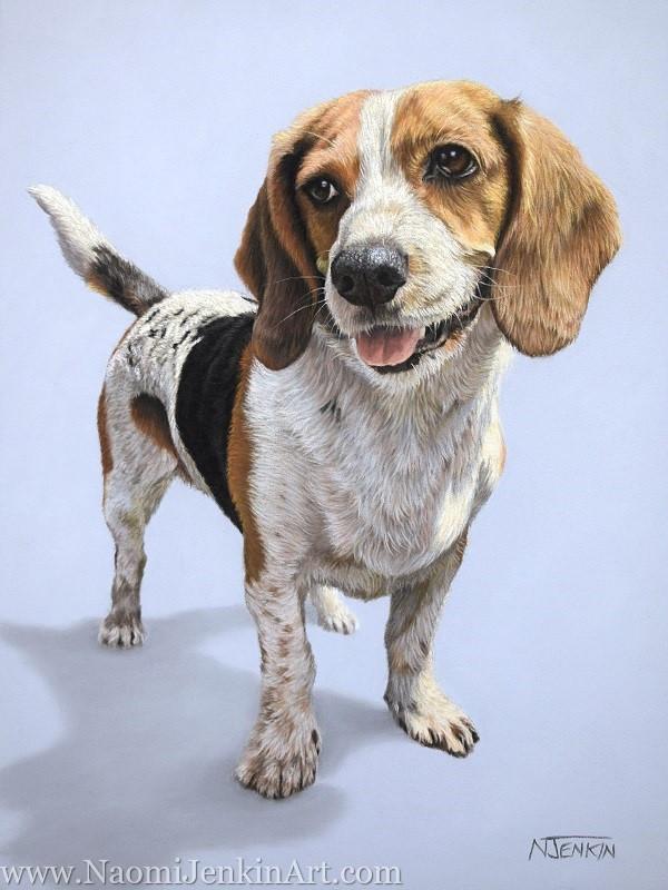 Basset Cavalier Cross dog portrait by Naomi Jenkin Art