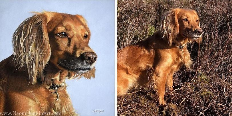 Dog portrait of Meg, the working Cocker Spaniel alongside a photo of Meg. Meg's portrait was drawn in pastels by pet portrait artist Naomi Jenkin.