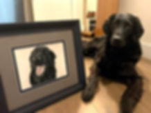 Framed pastel dog portrait of Kevin the Flat-Coated Retriever. Hand drawn by professional pet portrait artist Naomi Jenkin.