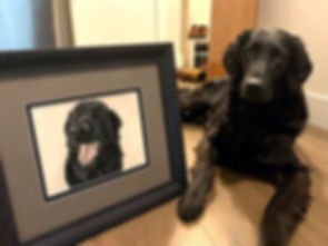 Kevin the Flat-Coated Retriever with his framed dog portrait, hand drawn by pet portrait artist Naomi Jenkin.