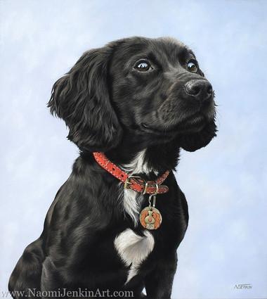 Mabel Cocker Spaniel Dog Portrait.jpg