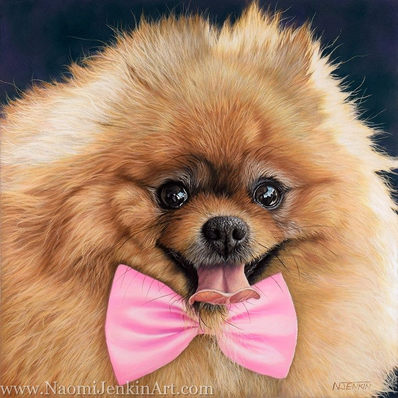 Pomerian dog portrait