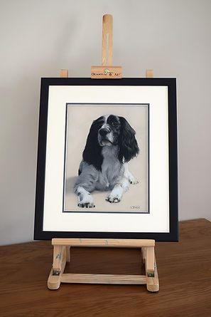 Framed dog portrait of Baxter the Cocker Spaniel. Hand drawn in pastels by Naomi Jenkin Art. Framed by Studio 4 in Liskeard, Cornwall.