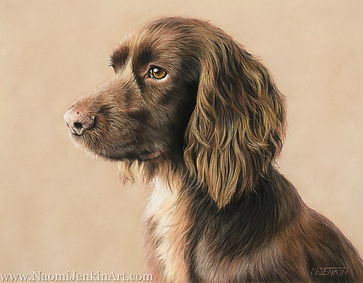 Portrait of Lola, the working Cocker Spaniel. Hand drawn in pastels by dog portrait artist Naomi Jenkin.