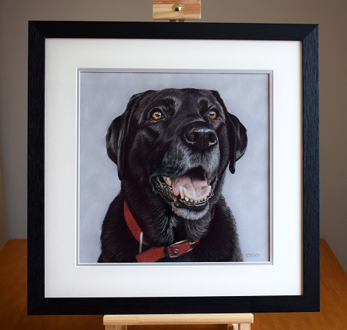Breaca - framed black labrador portrait by Naomi Jenkin Art