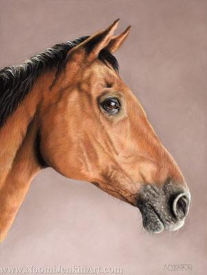 Fair Deed Dash - Arab Racing Horse portrait