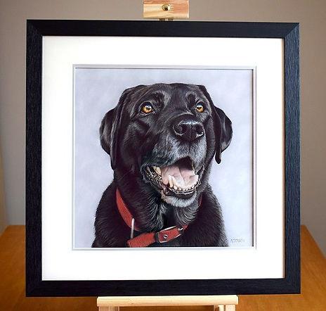 Dog portrait of Breaca the Black Labrador. Hand drawn in pastels by pet portrait artist Naomi Jenkin. Framed by Studio 4 in Liskeard.