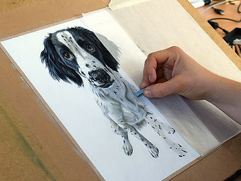 Dog portrait of Larry the Cocker Spaniel Puppy. Hand drawn by Naomi Jenkin Art.