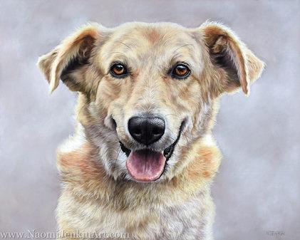Romanian rescue dog portrait