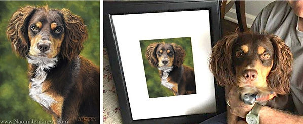 Scooby the English Cocker Spaniel posing with his dog portrait. Hand drawn by Naomi Jenkin.