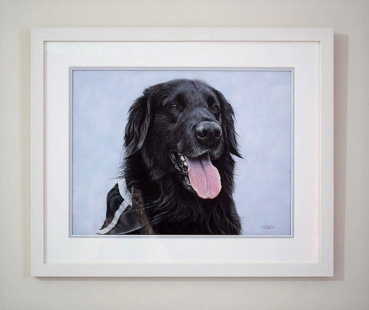 Framed pastel dog portrait of Hunter the black Flat-Coated Retriever. Drawn by pet portrait artist Naomi Jenkin.