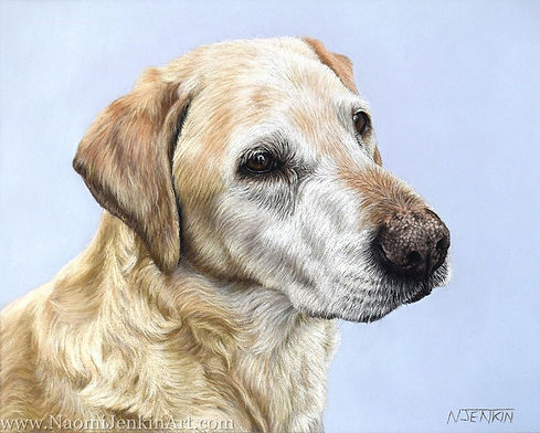 Dog portrait of Angus the Golden Labrador hand drawn by pet portrait artist Naomi Jenkin
