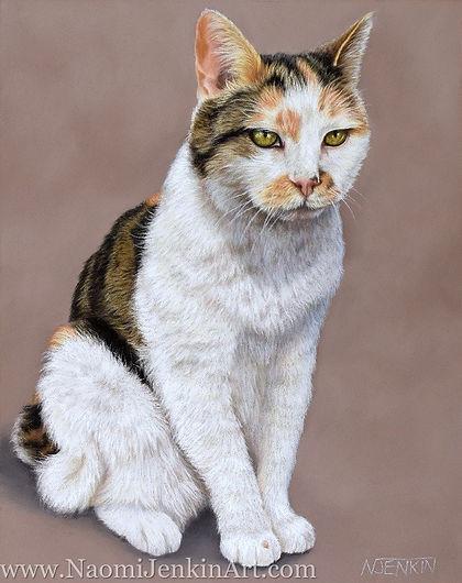 Cat portrait of Boots, a calico cat. Hand drawn by pet portrait artist Naomi Jenkin.
