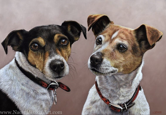 Jack Russell Terriers dog portrait