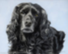 Dog portrait of Spin, the working Cocker Spaniel. Hand drawn in pastels by pet portrait artist Naomi Jenkin.