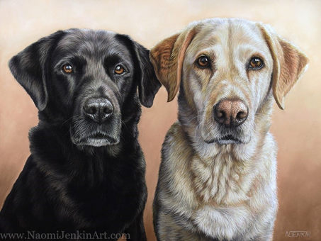 Black and Golden Labrador portrait