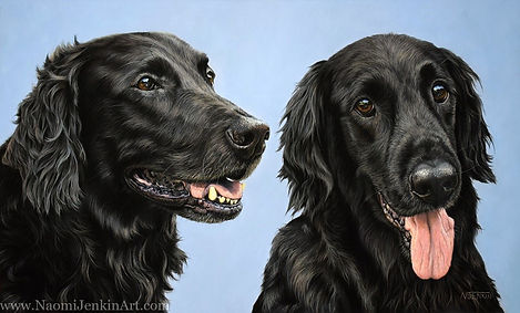 Portrait of two black Flat-Coated Retrievers, hand drawn in pastels by professional dog portrait artist Naomi Jenkin.