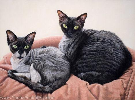 Cornish Rex cats portrait