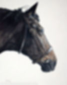 Pet portrait of Comet the horse. Hand drawn in pastels by Naomi Jenkin.