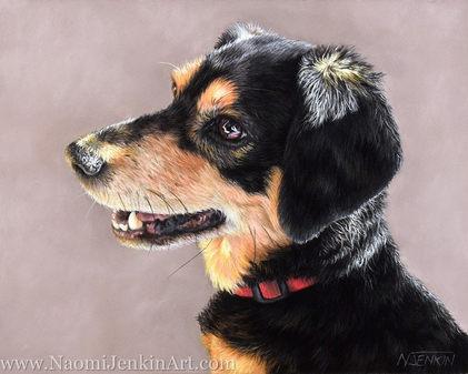 Beagle Cross Terrier dog portrait