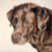 Dog portrait of Marvin the Chocolate Labrador, hand drawn in pastels by pet portrait artist Naomi Jenkin
