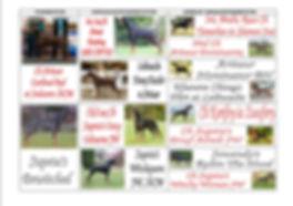 Ravenpup pedigree 2 (inside).jpg