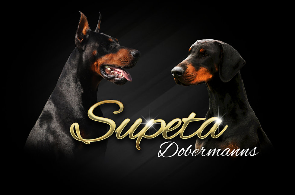 Supeta Dobermanns header colour.jpg