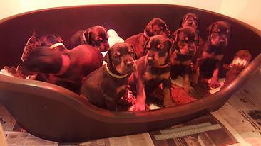 puppies!.jpg