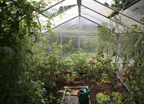 Life found in a vegetable garden
