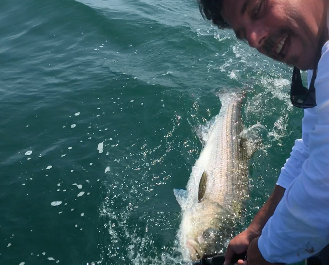 Striped Bass All Tackle Release Record Broken