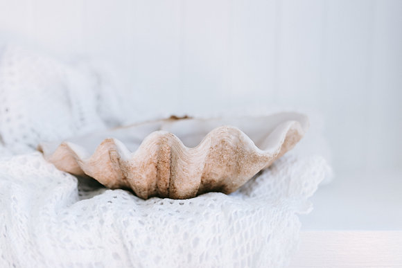 Resin Clam Shell Bowl