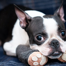 What are the best dog booties?