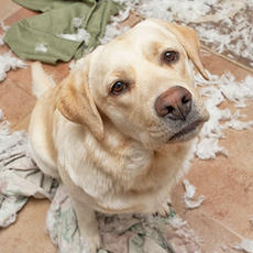 Does my dog have separation anxiety?