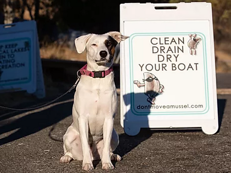 Sniffing Around the Globe: Meet the Mussel Dogs!