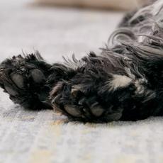 Why do my dog's feet smell like Fritos?