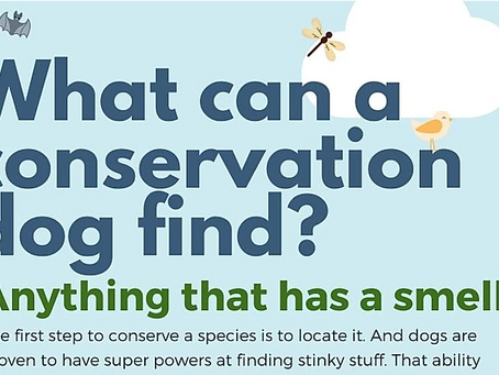 What can a conservation dog find?